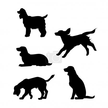 Breed of a dog Cocker Spaniel vector silhouettes.