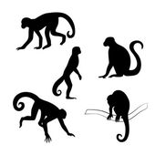 Capuchin monkey vector silhouettes