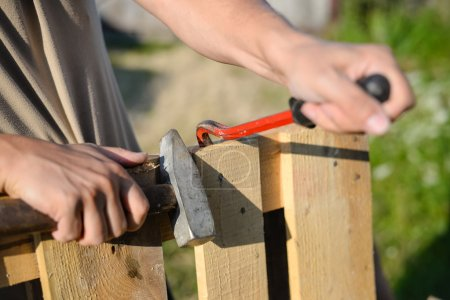 Photo for Picture of wood fence gate repairing. Closeup of male hands with crowbar and hammer on blurred summer outdoor background - Royalty Free Image