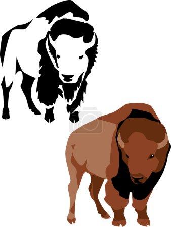 Illustration pour Bison d'Amérique - image libre de droit