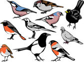 european common birds