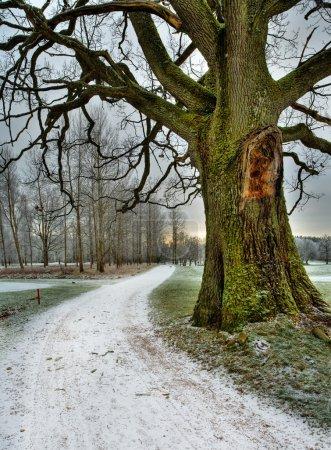 Photo pour Route enneigée sous et vieux chêne - image libre de droit