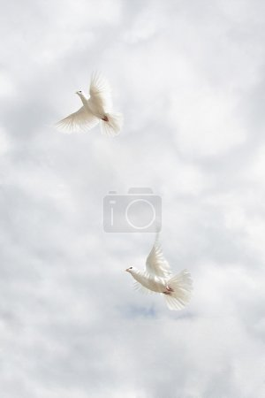 Two beautiful white doves on sky background...