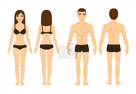 Illustration for Male and female body, front and back. Isolated vector illustration. - Royalty Free Image