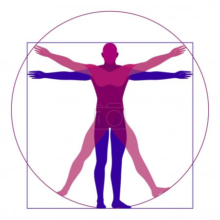 Illustration for Vitruvian man, modern styling, different position of a man, vector illustration - Royalty Free Image
