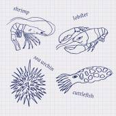 Drawings in their notebooks in a cage of marine animals and seafood cuttlefish lobster sea urchin shrimp