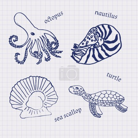 Illustration for Drawings in their notebooks in a cage of marine animals and seafood octopus, scallop, Nautilus, turtle, oysters. Vector - Royalty Free Image
