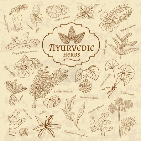 Retro illustration of Ayurvedic herbs. Set of web elements