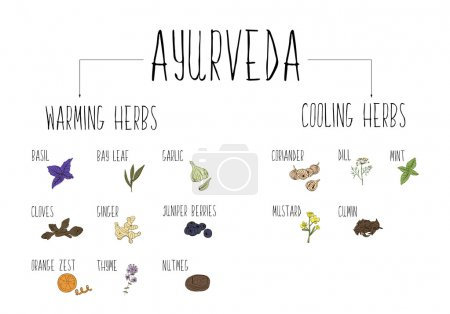 Hand-sketched collection of elements of Ayurvedic spices in our kitchen. Warming and cooling Herbs and supplements Ayurveda.