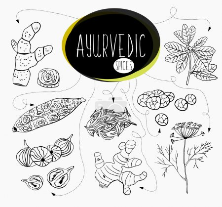 Hand-sketched collection of elements of Ayurvedic spices in our kitchen.  Herbs and supplements Ayurveda.