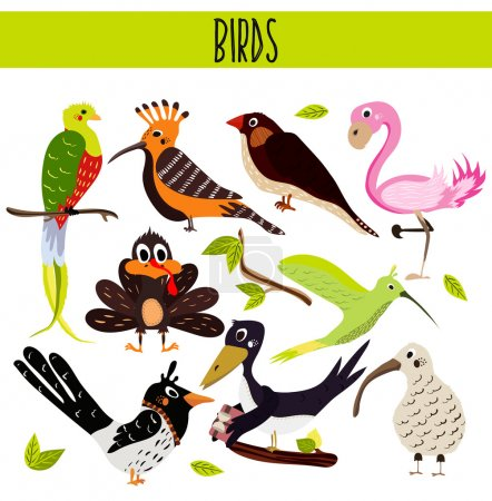 Set of Cute cartoon Animals birds living in different corners of the planet the forests and the jungles. Flamingo, kiwi, magpie, crow, upupa, Hummingbird, Turkey.Vector