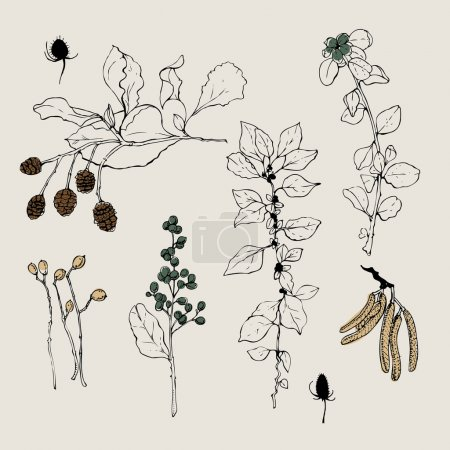 Vector collection of hand drawn spices and herbs. Botanical plant illustration.