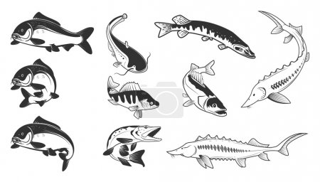 Set of river fish marks. River carp,