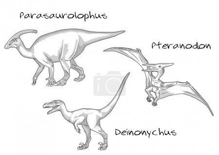 Thin line engraving style illustrations, various kinds of prehistoric dinosaurs, it includes parasaurolophus, pteranodon, deinonychus