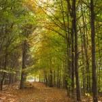 Постер, плакат: Positive vibes autumn forest