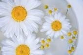 Heřmánkový květ na povrchu vody, pozadí