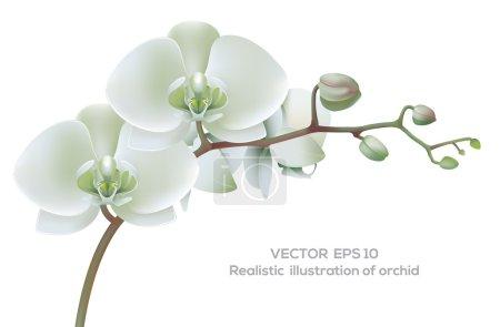 Illustration for Horizontal photo realistic illustration of white orchid. - Royalty Free Image