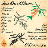 Sea buckthorn. Vector set of 3 drawing and text