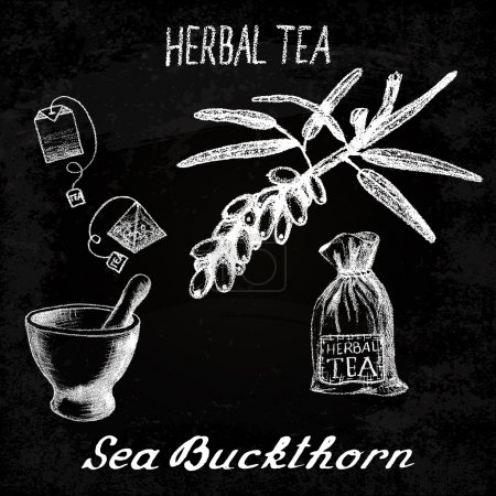 Illustration for Sea buckthorn herbal tea. Chalk board set of vector elements on the basis hand pencil drawings. Sea buckthorn, tea bag, mortar and pestle, textile bag. For labeling, packaging, printed products - Royalty Free Image