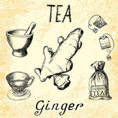 Ginger herbal tea Set of vector elements on the basis hand pencil drawings
