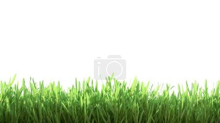 Photo pour Panorama vert printemps frais isolé sur fond blanc . - image libre de droit