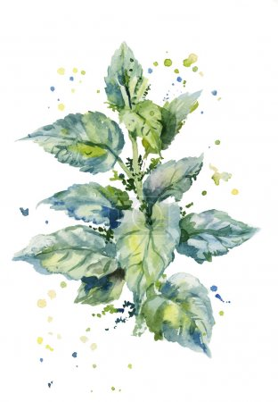 illustration of a bush of stinging nettles