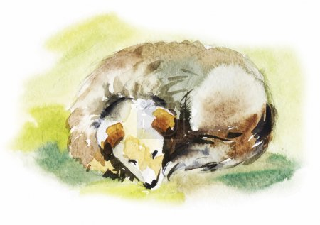 Watercolor dog sleeps curled up