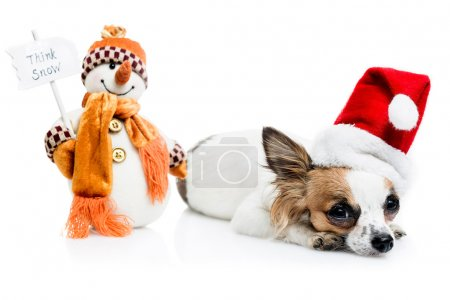 Chihuahua in  Christmas hat and snowman