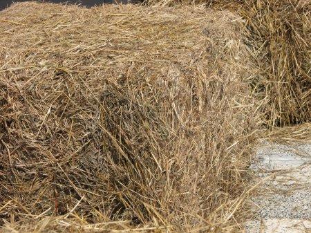 A sheaf of straw