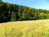 """Постер, картина, фотообои """"Луг и лиственного леса в дикой природе"""""""