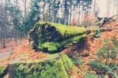 """Постер, картина, фотообои """"дерево, заросшие мхом внутри леса крупным планом"""""""