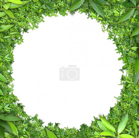 Photo for Green Leaves frame isolated on white background - Royalty Free Image