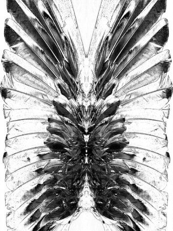 Picturesque monochrome feathers