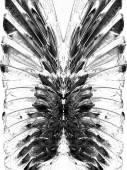 Picturesque monochrome feathers