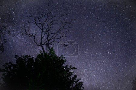 Astrophotography star trails with dry tree over forest.