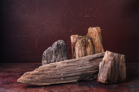 Petrified Wood  put on table in dark background...