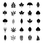 Leaves of plants or trees glyph vector icons