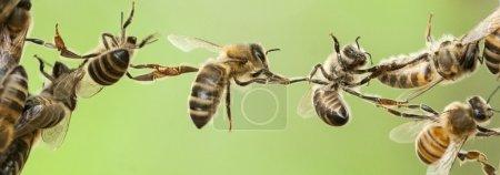 Photo pour Pied de page en-tête de site ou bannière. Peut simbolise : travail d'équipe, connexion, lien, apiculture. - image libre de droit