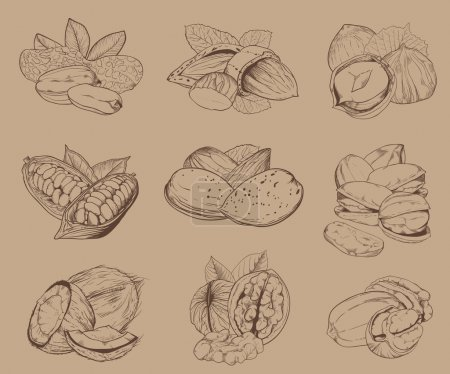 Engraved nuts isolated. Set of mixed nuts.