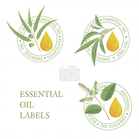 Illustration for Essential oils labels: tea tree, eucalyptus,patchouli. Aromatherapy. - Royalty Free Image
