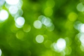 green nature background, selective focus