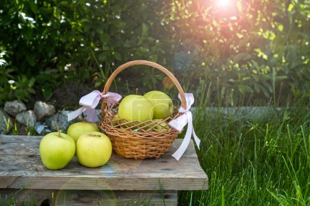 Apples in a basket and some garden decorations on green grass background and foliage. Garden pail with purple flowers with greens and herbs background.