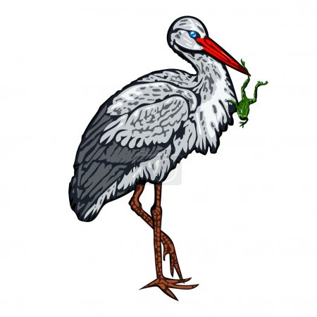 Stork standing on one leg and holds a frog in beak