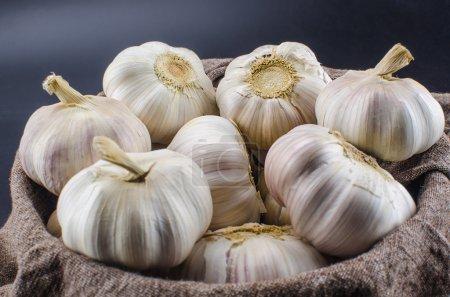 Photo for Garlic - Royalty Free Image