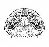 Bird Vector illustration for greeting card poster or print on clothes Eagle falcon or hawk