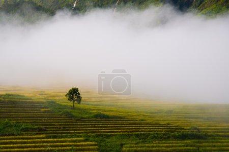 Beautiful terraced rice field