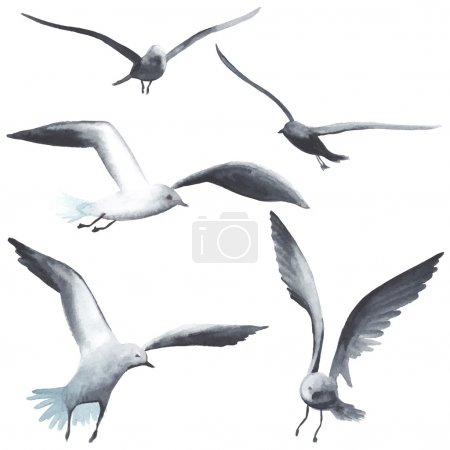 Illustration for Watercolor seagull made in vector. Each bird is separately. - Royalty Free Image