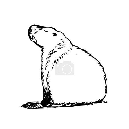 Large capybara sits