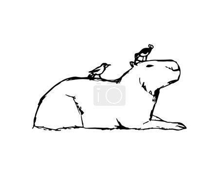 Capybara and birds