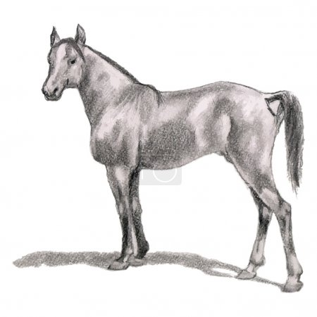 Arabian horse, stallion. Realistic figure.